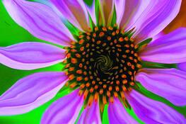 Flower 1 by Brenda Lindfors