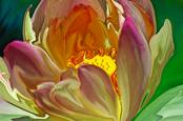 Flower 5 by Brenda Lindfors