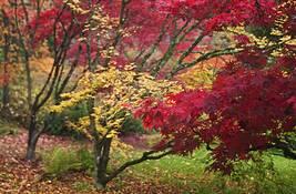 Autumn Bokeh 2 by Dean Forbes
