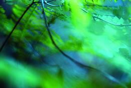 Blue Fern Scape by Nancy Abens