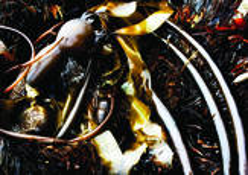 Kelp Abstract 2 by Nancy Abens