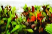 Colors of my Garden 3 by Robert Polillo