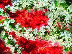 Cherry Blossom Festival by Rodney Gene Mahaffey