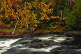 Autumn by Rachel Schneiderman