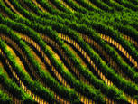 Wine Country by Rodney Gene Mahaffey