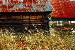 American Harvest by Joanne Scherf