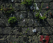 Grass Tufts & Cobblestone by Scott Brock