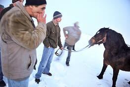 Horse Market #2 by Beata Wolniewicz