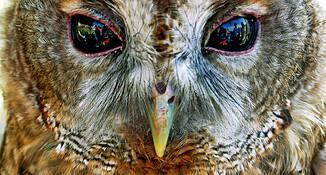 Owl by Matthew C. Miller