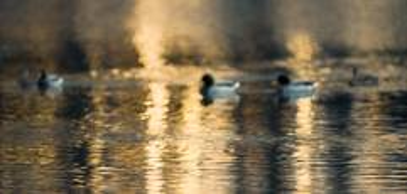 Golden Pond by Robert Biondo