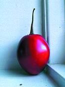 Red by Anne De Geer