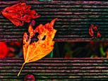 Fiery Autumn Leaves by George Turton
