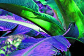 Purple frond by Kerry Butterworth