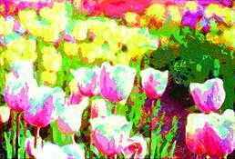 Tulip 1 by Sophia Koopman