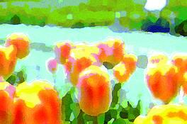Tulip 2 by Sophia Koopman