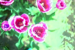 Tulip 3 by Sophia Koopman