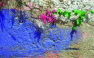 Wall with Flowers by Robert Colantuono