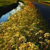 Landscape 2 by Linda Koopman