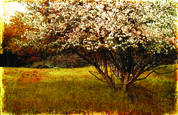 Spring Bloom. St. Paul by Ron Germundson