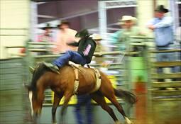Bronc Rider by Allan Goodman