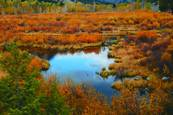 Beaver Pond Reflection by Marybeth Flower