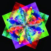 Lisanthus Kaleidoscope by Tom Jewett