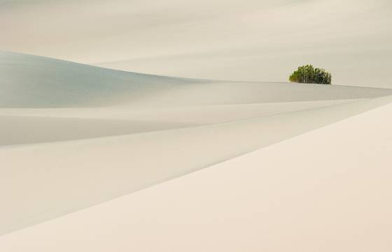 Dune tranquility
