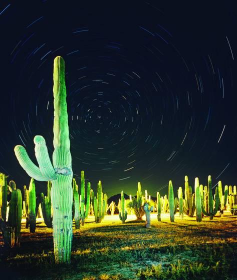 Cactus and stars