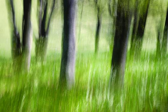 Oak grove abstract