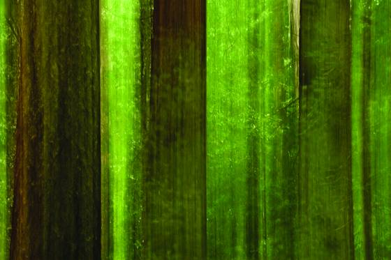 Redwood maze