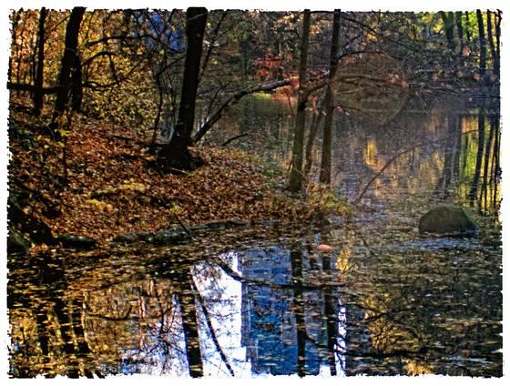 Central park pond reflection