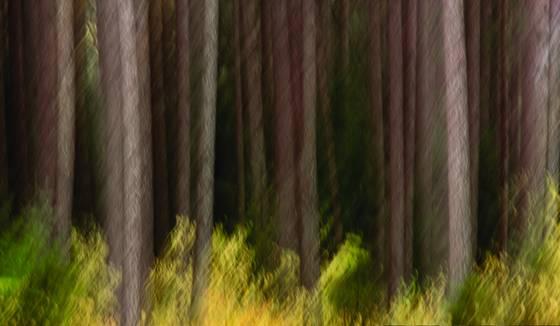 Pine trees impression