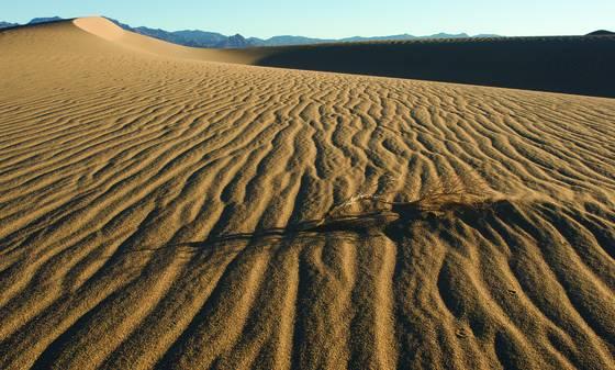 Dune life