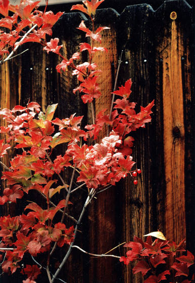 Colorado leaves