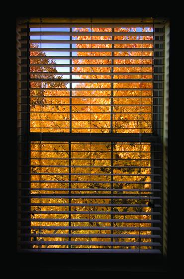 My window   autumn