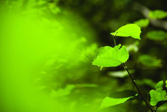 Leaf swirl