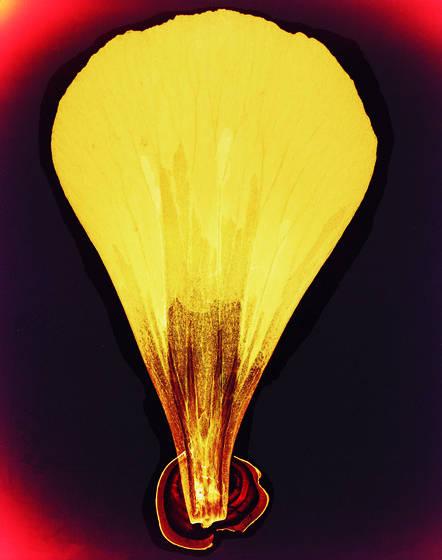 Petal balloon