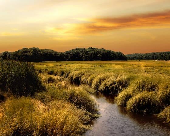 Parker river marsh
