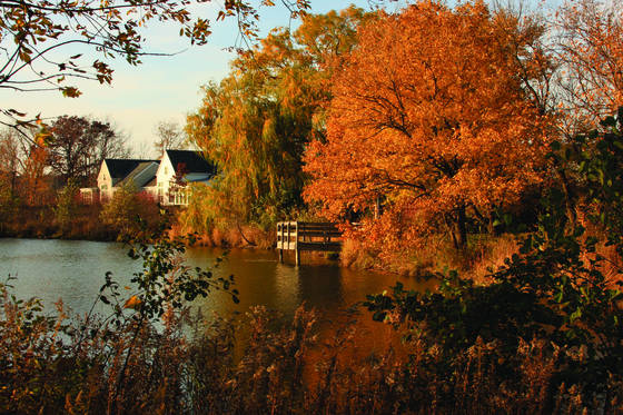 Suburban wetland