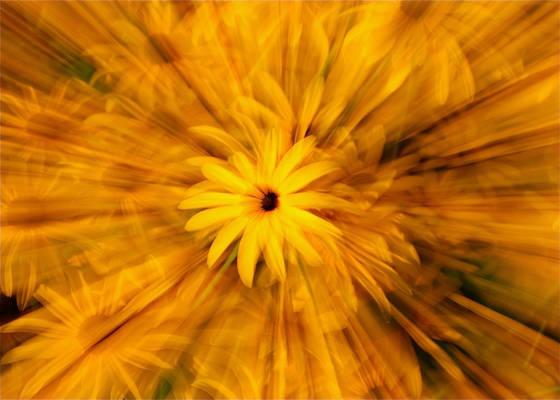 Daisy explosion