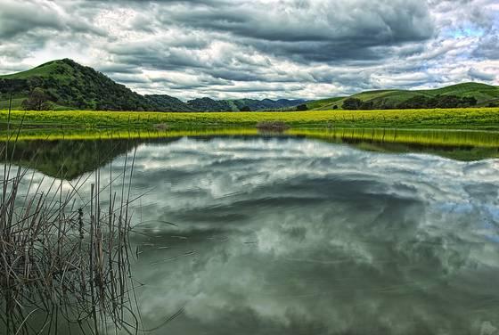 Napa mustard lake