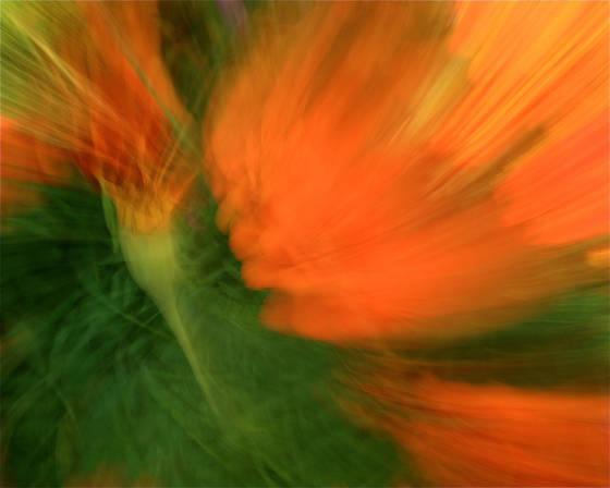 Flippin  florals