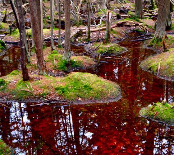 Flax pond
