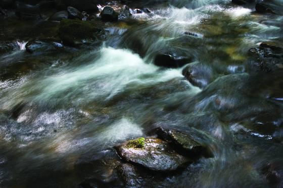 Roan mountain stream