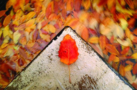 Corner leaf