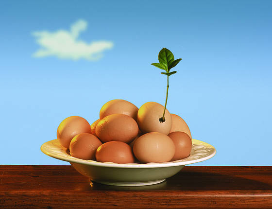 Eggs 4 brekky