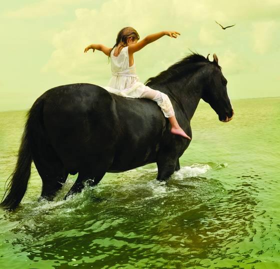 Marwari stallion 1