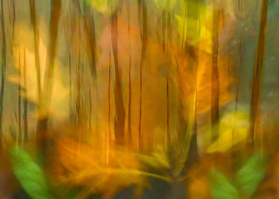 Exposure fusion   leaves trees