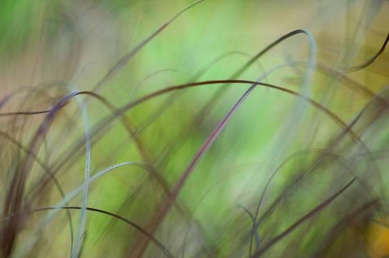 Lexicon of a grass 26