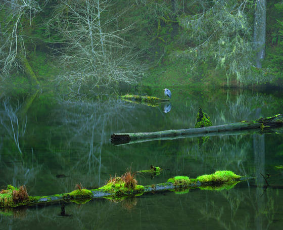 Hoh pond